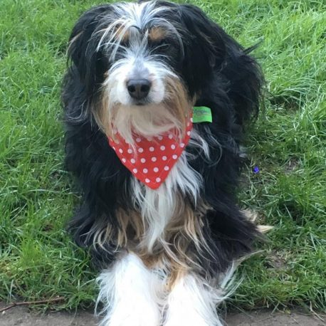 Dimples  luxury dog bandana Red polka dot