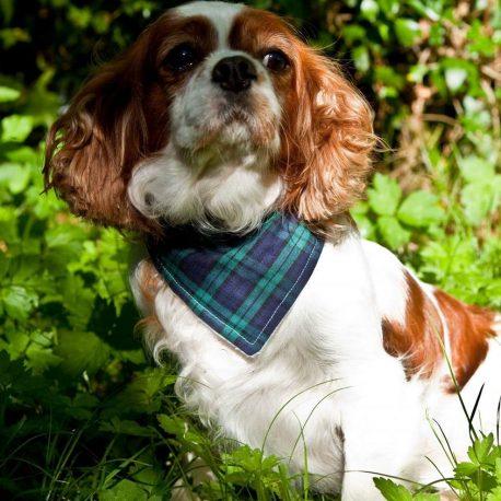 Dimples  luxury dog bandana Blue Tartan check
