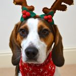 Dog as reindeer christmas fun | Dimples Sew Happy
