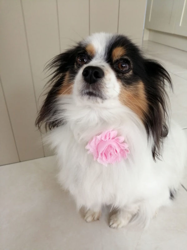 Baby Pink Flower Dog Collar - Dog Model | Dimples Sew Happy