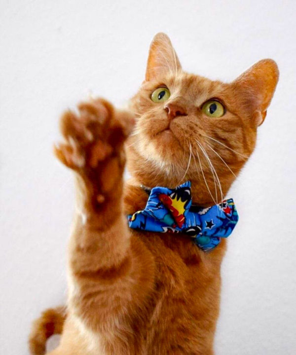 Superhero Comic Cat Bow Tie | Dimples Sew Happy