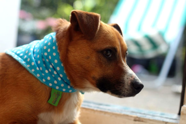 Dog with Dimples luxury Dog bandana Turquoise polka dot | Dimples Sew Happy