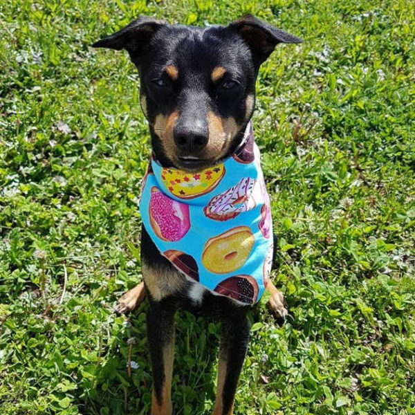 Donuts Dog Bandana Gift Miniature Pinscher | Dimples Sew Happy