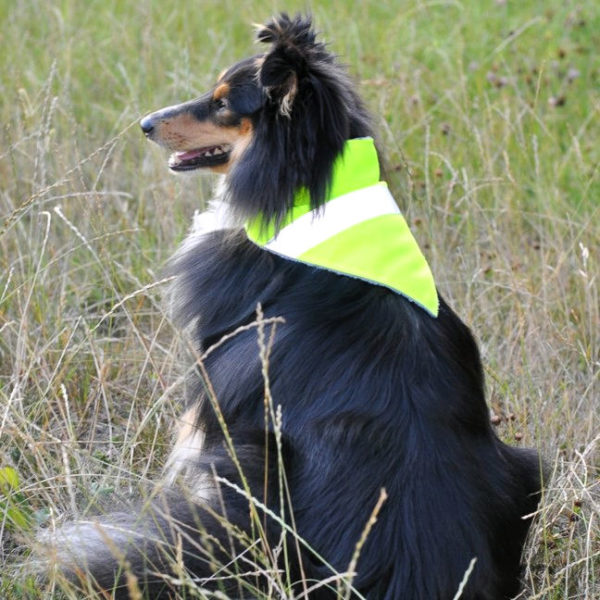 Hi-Vis Reflective Tape Dog Bandana dog model | Dimples Sew Happy