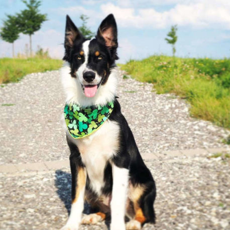 Lucky Shamrock Dog Bandana large dog | Dimples Sew Happy