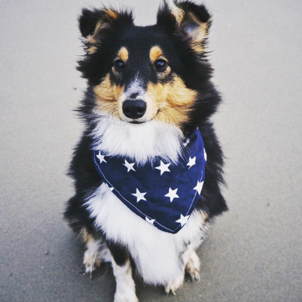 Navy Movie Stars Dog Bandana for large dogs | Dimples Sew Happy