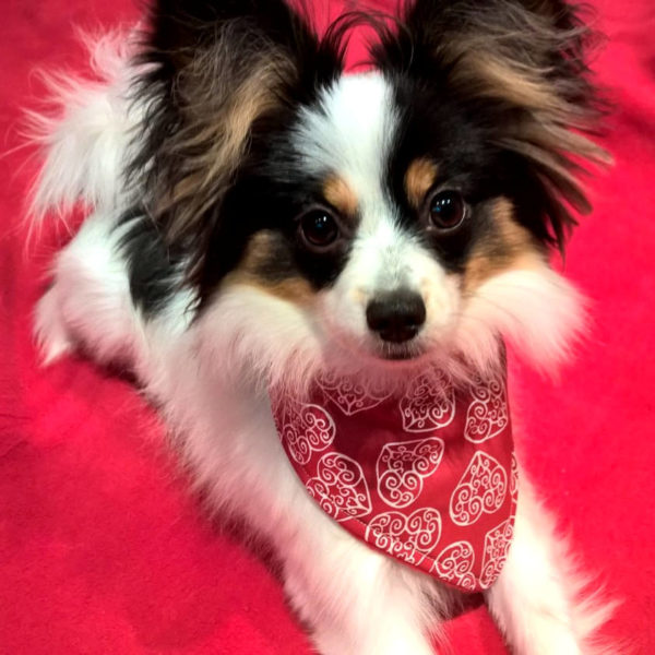 Romantic Hearts Dog Bandana Papillon | Dimples Sew Happy