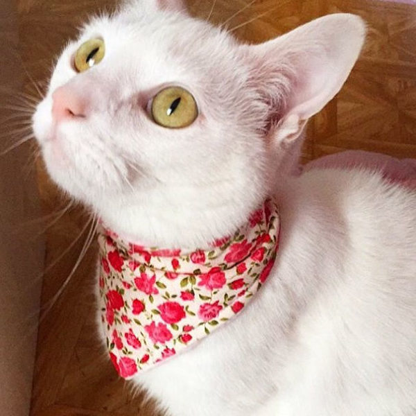 Shabby Chic Cat Bandana | Dimples Sew Happy
