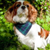Spaniel with Dimples luxury dog bandana Blue Tartan check | Dimples Sew Happy