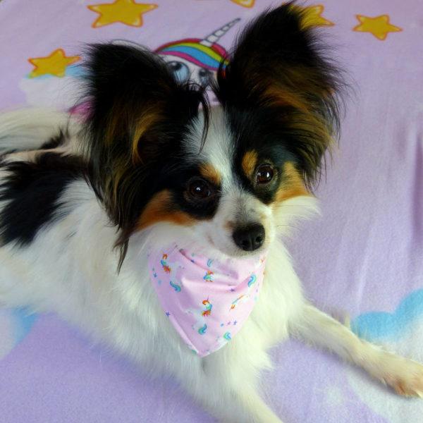 Unicorn Fantasy Dog Bandana on small toy dog | Dimples Sew Happy