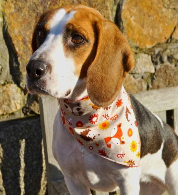 Woodland Animals Dog Bandana gift for dogs   Dimples Sew Happy