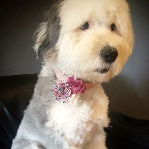 Mauve Triple Flower Dog Collar