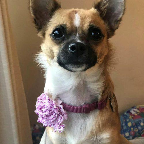 Pink & Purple Hearts Flower Dog Collar