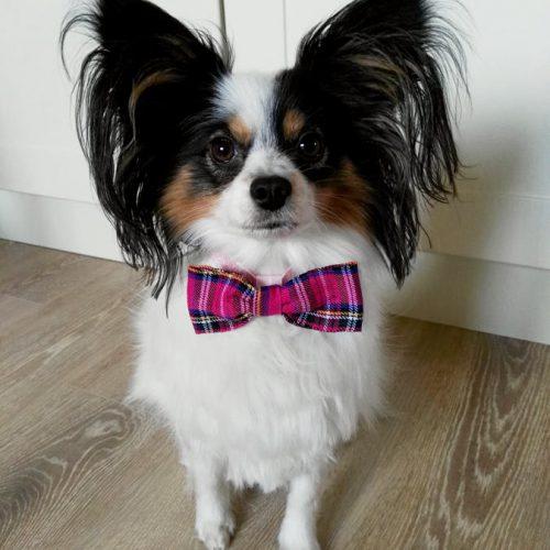 Pink Tartan Dog Bow Tie
