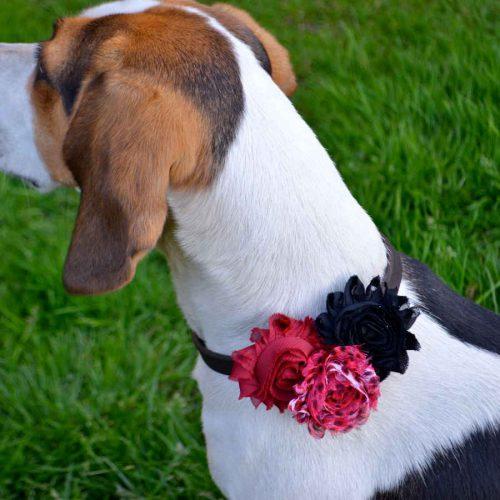 Valentine Triple Flower Dog Collar