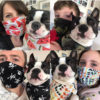 Reusable Cloth Barrier mask - pack of 5